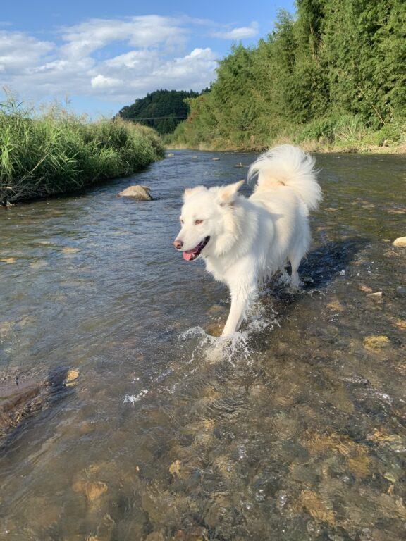 はじめての川遊び