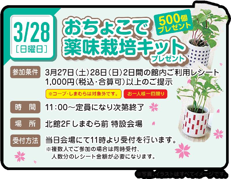 お楽しみワークショップ 3/28 おちょこで薬味栽培キットプレゼント